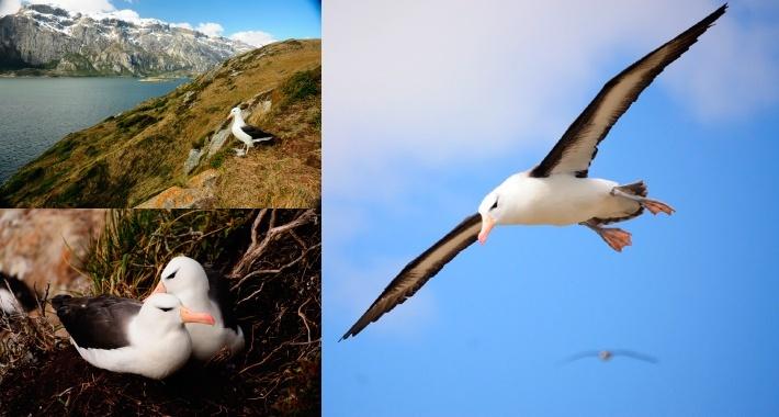 albatros-1.jpg